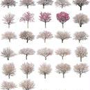 桜 27個セット  - Cherry Blossoms  sa_set01
