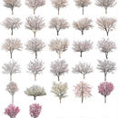 桜 27個セット  - Cherry Blossoms  sa_set02
