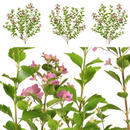 観葉植物素材 3個セット 8kp0020