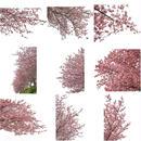 桜 切り抜き素材セット  - Cherry Blossoms   sa_017