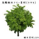 フリー素材!ケヤキ鳥瞰樹木素材 Birds-eye-free02