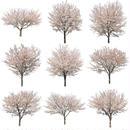 桜 切り抜き素材セット  - Cherry Blossoms   sa_008