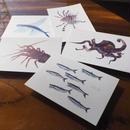 ポストカード5枚セット「umihaku」