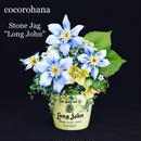 "花ギフト stone  jag  flower""long john"""