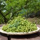 ぶどう山椒(手摘み臼挽き粉山椒)8g×3個入【定期便】