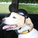 Dog Helmet  (L)