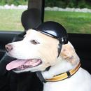 Dog Helmet  (L)