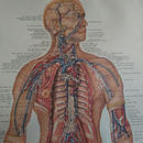 In 1957     THE LYMPHATIC SYSTEM   Poster