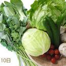 おためし購入野菜セット(中)