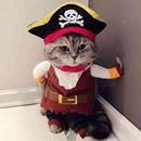 ペットアフィリエイト「猫の洋服の選び方」記事テンプレート(2000文字)
