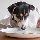 ペットアフィリエイト「犬の健康に良いごはんの選び方」記事テンプレート(5200文字)