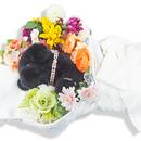 ペットアフィリエイト「ペットの葬式」記事テンプレート(ペラサイト・ブログ兼用/2600文字)
