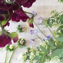 花の不定期便
