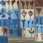 Working Collages / Karl Blossfeldt