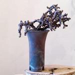 ペラルゴニム    ミラビレ no.002  Pelargonium mirabile