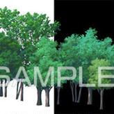 素材_遠景の木々01