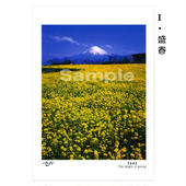 ポストカード 同柄3枚入セット-③ (4種類掲載)
