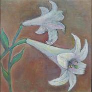 鉄砲百合 (lily)