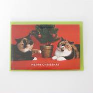 クリスマスカード ごま&めめ親子