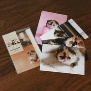 子猫のめめ ポストカードセットA(5枚)