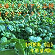 本場イタリアン品種 イタリアンクラシコ【バジル(生)】15g/袋