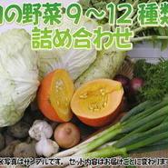 """【定期品】【こだわり】""""定期""""宅配サービス「栄養機能性野菜Lセット」送料無料"""
