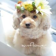 ホワイトひまわりの花かんむり