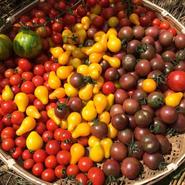 カラフルトマトセット(農薬不使用・化学肥料不使用栽培)
