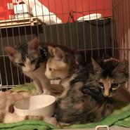 保護猫たちへのご支援(寄付)