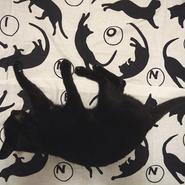 PINPONS / 本染め・猫手ぬぐい