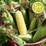 農薬・化学肥料不使用とうもろこし5本セット