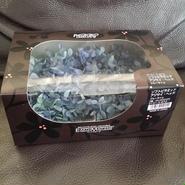 ソフトピラミッドアジサイ ヘッド ブルーライム 1箱