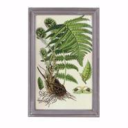 DULTON(ダルトン) PLANT FRAME 【E】