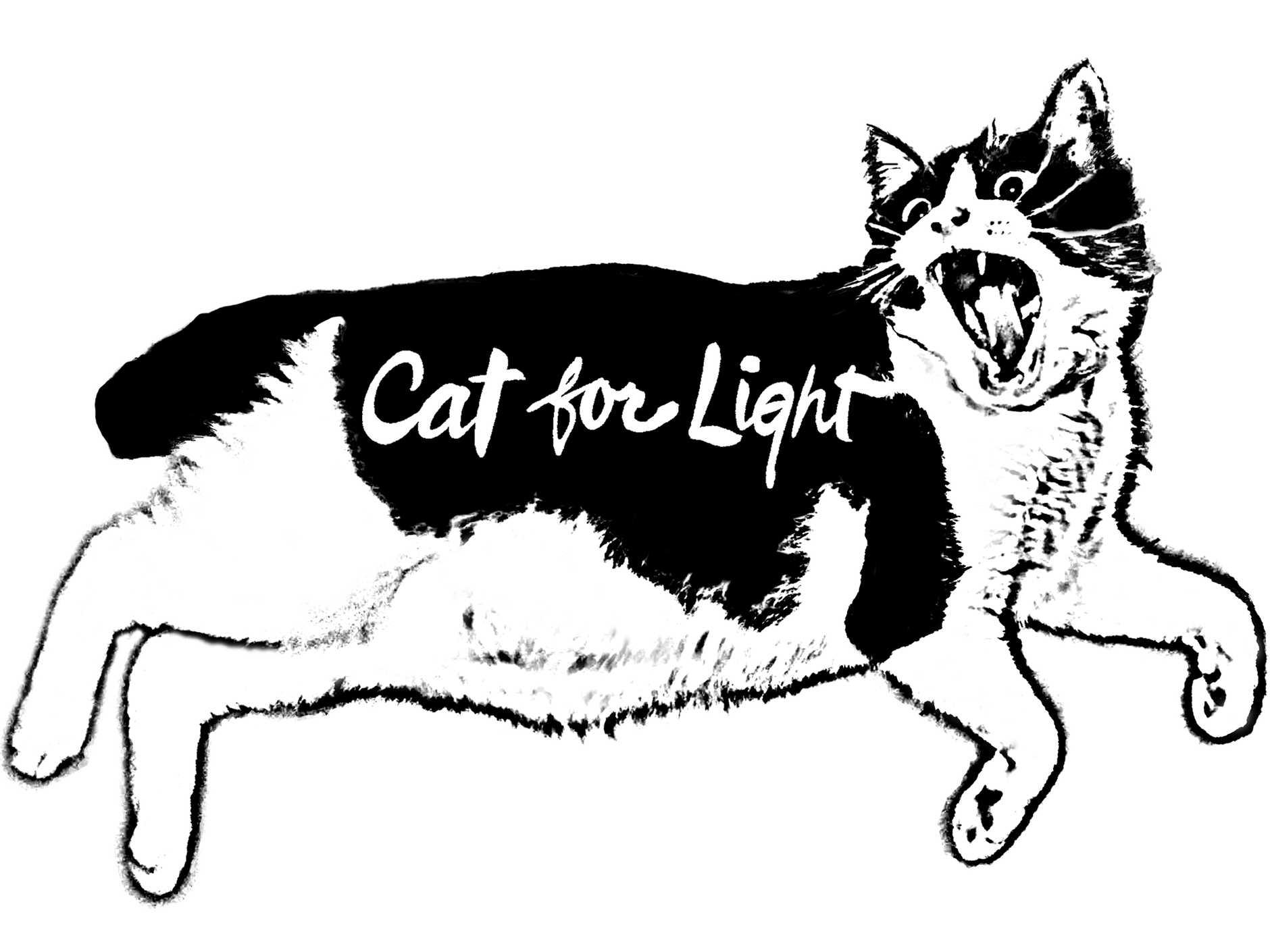 Cat for Light