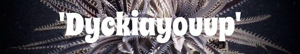 'Dyckiayouup'