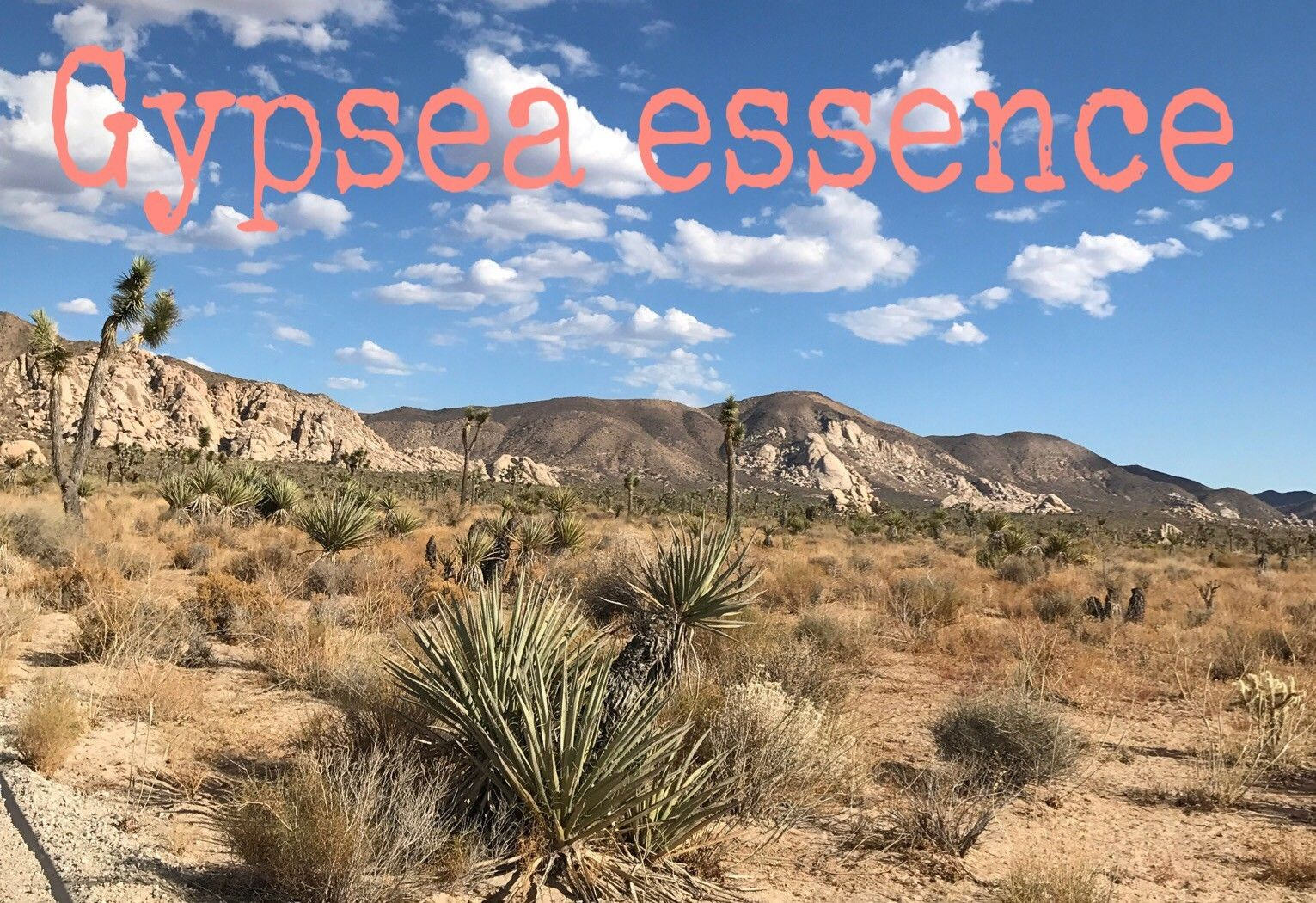 wild gypsea essence