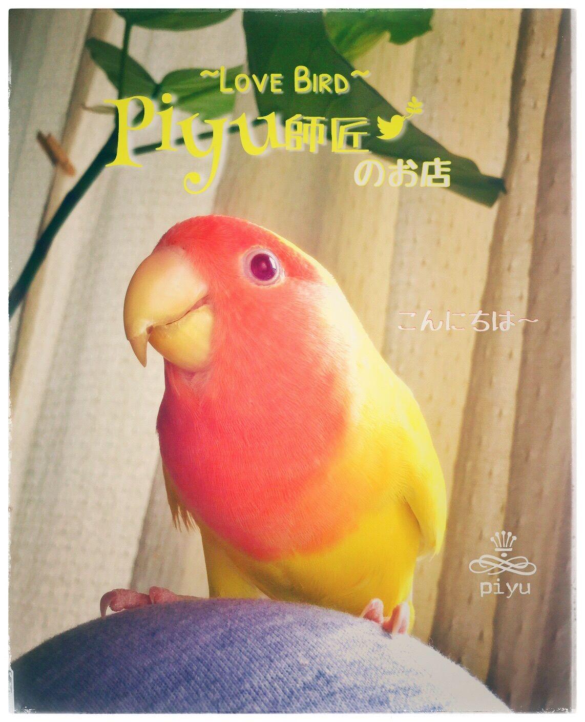piyu師匠~LoveBird~
