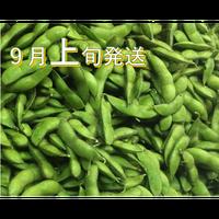 [予約販売] だだちゃ豆 食べ応えの「おうら」9月上旬発送 8/23締切