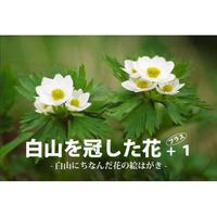 絵はがきセット「白山を冠した花」