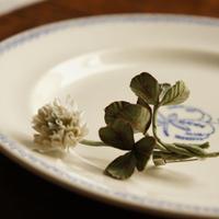 クローバー&白詰草