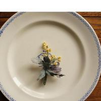 紫葉のミモザ-M