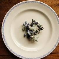 丸葉のビオラと黒い花