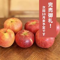 老木りんご6個セット