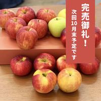 稀少な老木りんご 5キロ (3種類以上の品種)