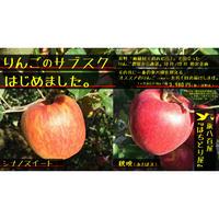 【産直】長野りんごサブスクプラン3kg(全2回)10月/12月