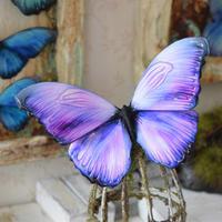 蝶のマグネット メネラウスモルフォ lavender.md Msize