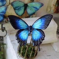 蝶のマグネット オオルリアゲハ blue plus Lsize(両面使用)