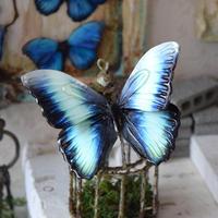 蝶のマグネット ディダミアモルフォ Turquoise Msize
