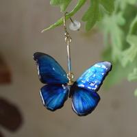 蝶のピアス メネラウスモルフォblue plus&magenta.col 3Ssize (両面、片耳用)