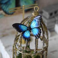 蝶のマグネット オオルリアゲハ blue plus 2Ssize